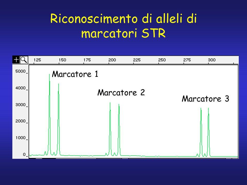 Riconoscimento di alleli di marcatori STR