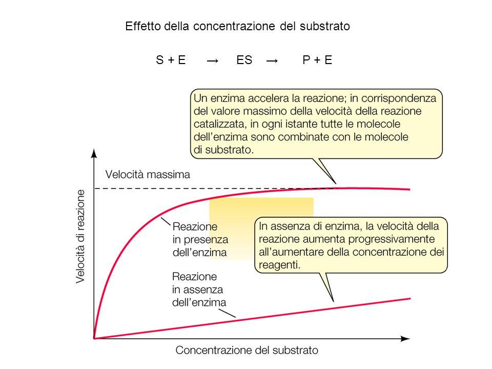 Effetto della concentrazione del substrato