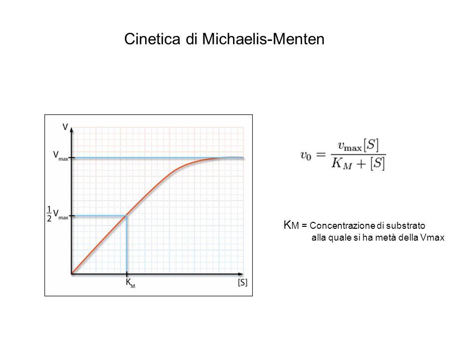 Cinetica di Michaelis-Menten