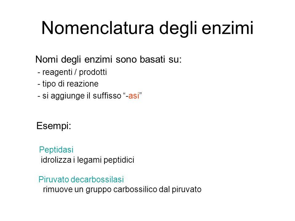Nomenclatura degli enzimi