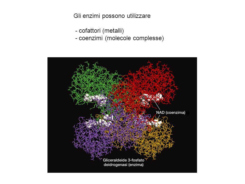 Gli enzimi possono utilizzare