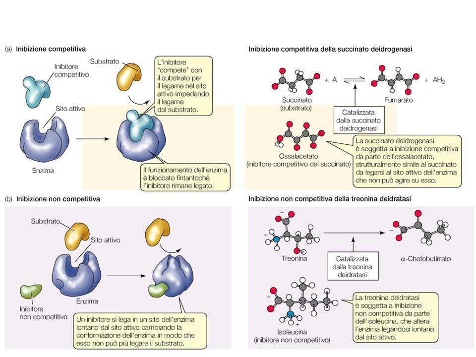 Gli inibitori sono competitivi (si legano allo stesso sito del substrato) o non competitivi (si legano ad un sito diverso).