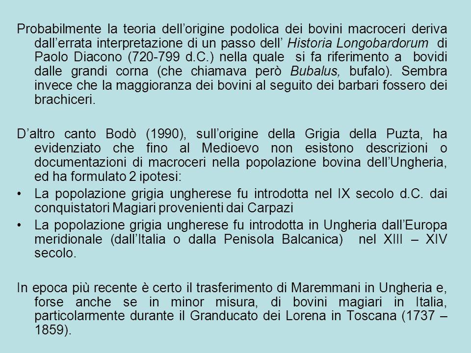 Probabilmente la teoria dell'origine podolica dei bovini macroceri deriva dall'errata interpretazione di un passo dell' Historia Longobardorum di Paolo Diacono (720-799 d.C.) nella quale si fa riferimento a bovidi dalle grandi corna (che chiamava però Bubalus, bufalo). Sembra invece che la maggioranza dei bovini al seguito dei barbari fossero dei brachiceri.