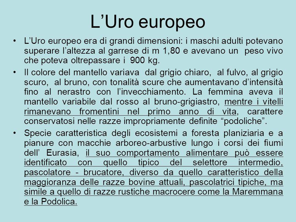 L'Uro europeo