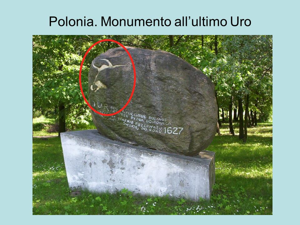 Polonia. Monumento all'ultimo Uro