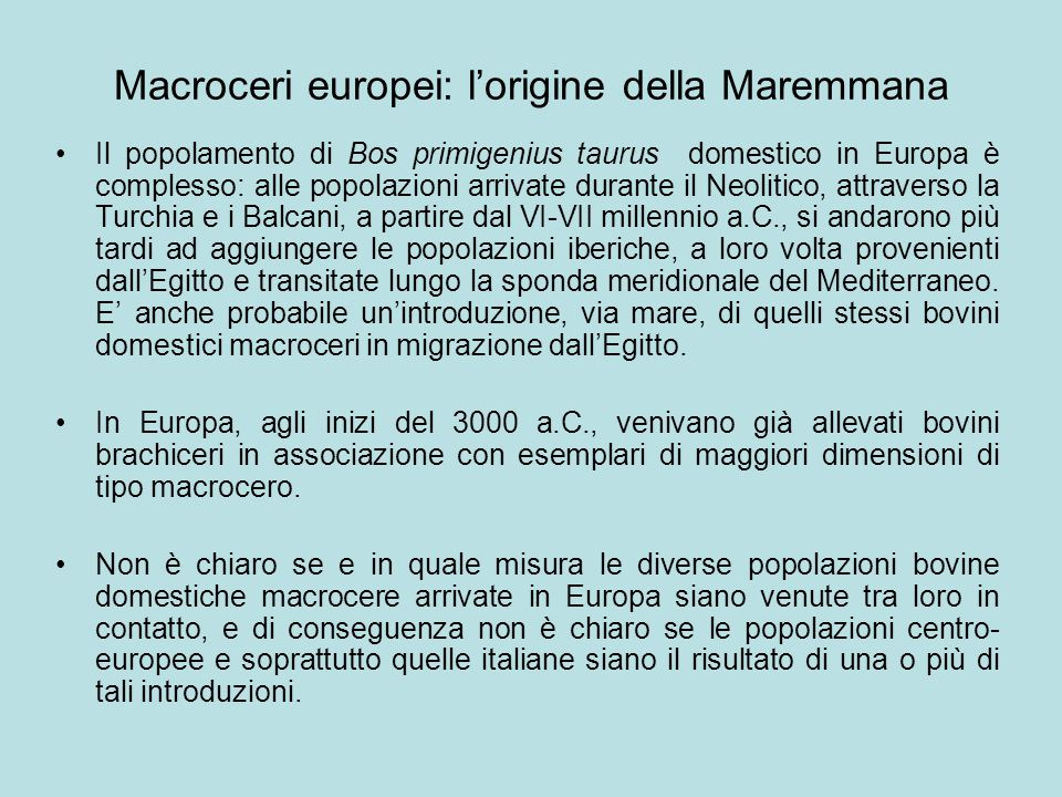 Macroceri europei: l'origine della Maremmana