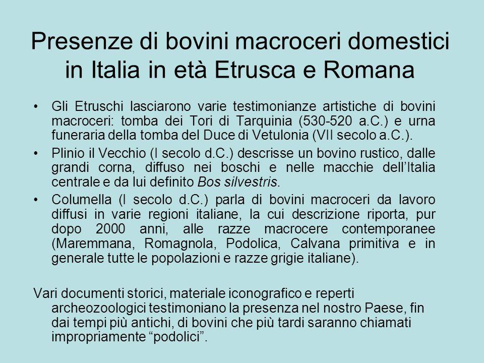 Presenze di bovini macroceri domestici in Italia in età Etrusca e Romana