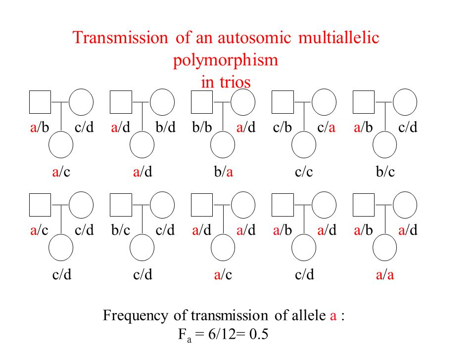 Transmission of an autosomic multiallelic polymorphism in trios