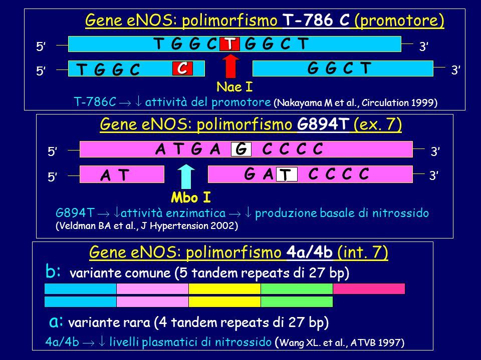 b: variante comune (5 tandem repeats di 27 bp)