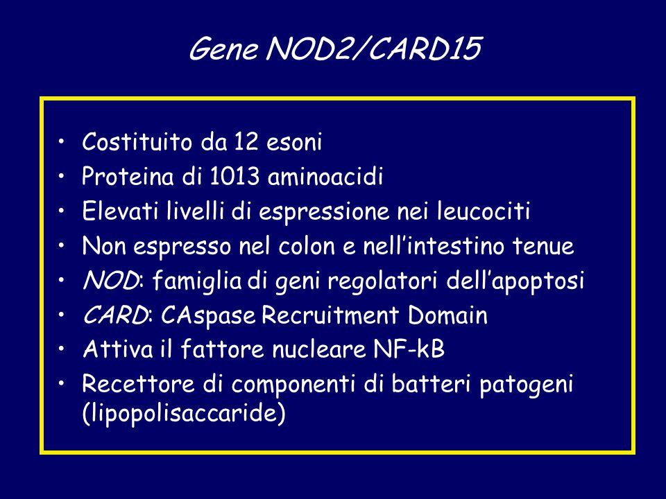 Gene NOD2/CARD15 Costituito da 12 esoni Proteina di 1013 aminoacidi
