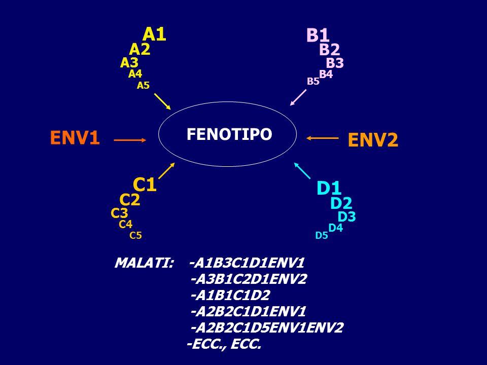 A1 B1 ENV1 ENV2 C1 D1 A2 B2 FENOTIPO C2 D2 A3 B3 C3 D3