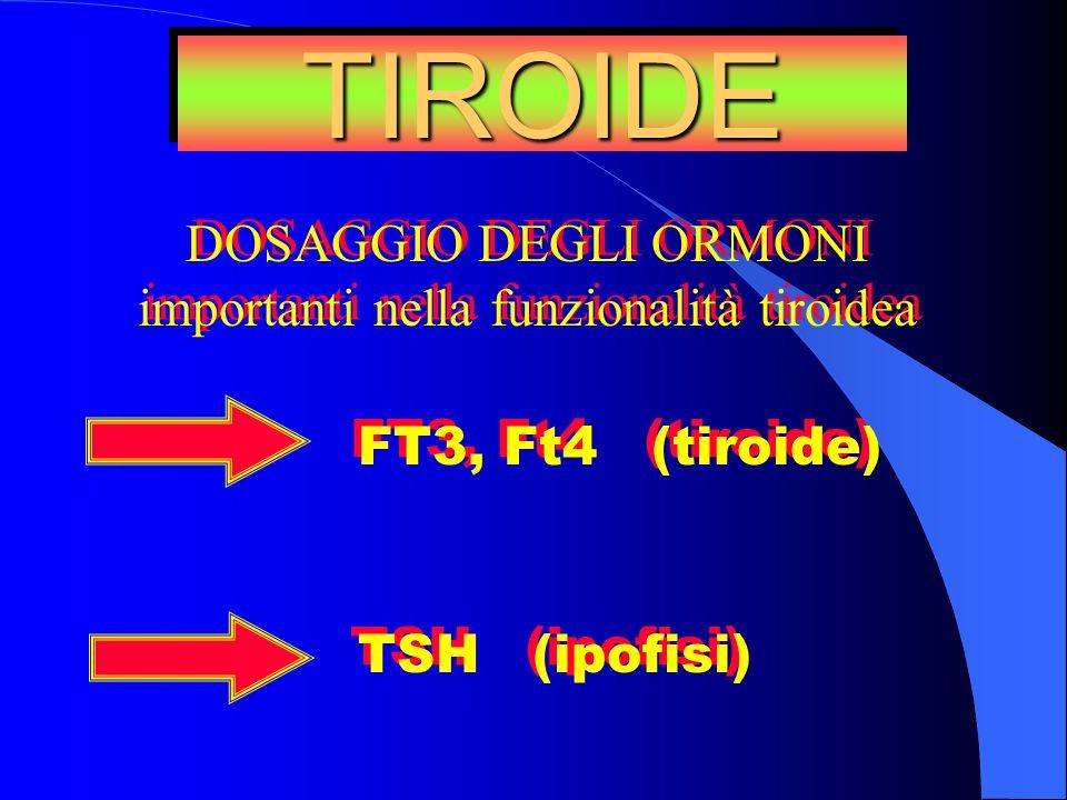 importanti nella funzionalità tiroidea
