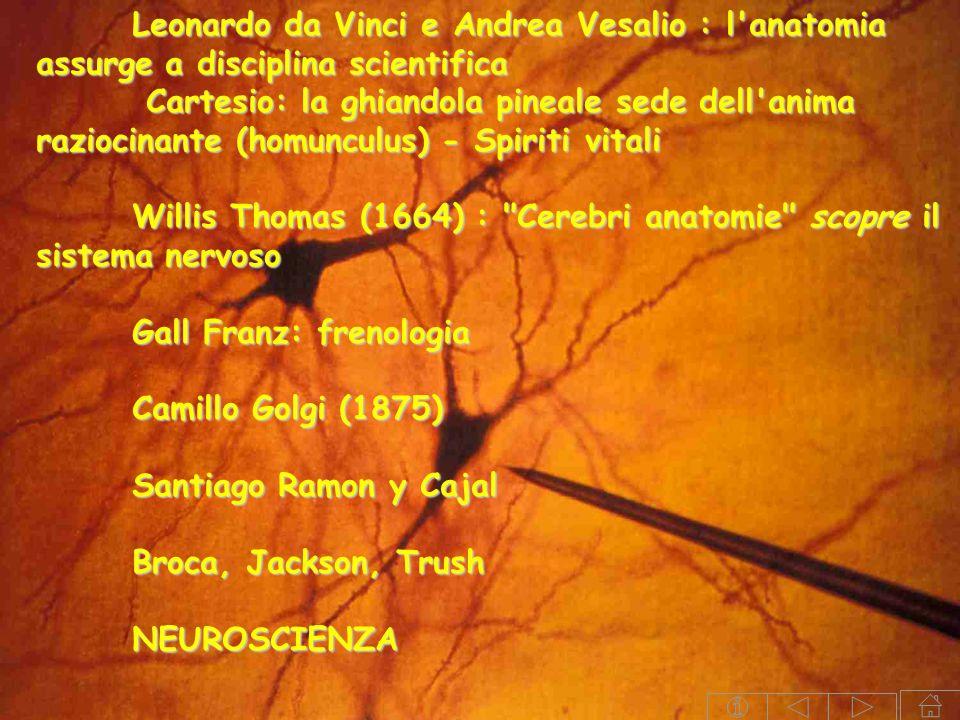 Leonardo da Vinci e Andrea Vesalio : l anatomia assurge a disciplina scientifica