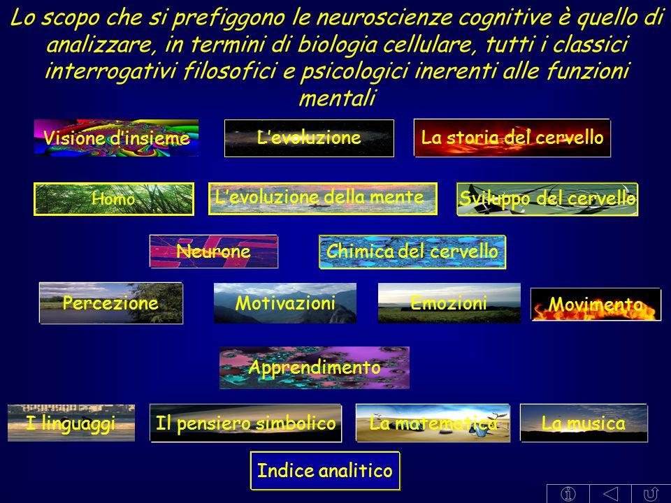 Lo scopo che si prefiggono le neuroscienze cognitive è quello di analizzare, in termini di biologia cellulare, tutti i classici interrogativi filosofici e psicologici inerenti alle funzioni mentali