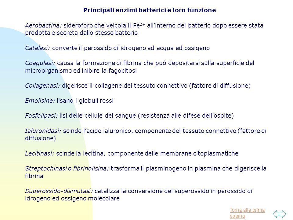Principali enzimi batterici e loro funzione