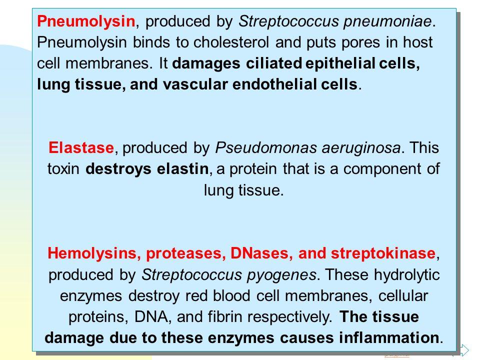 Pneumolysin, produced by Streptococcus pneumoniae