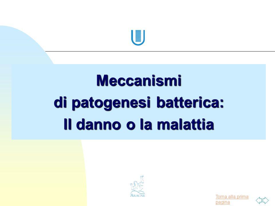 Meccanismi di patogenesi batterica: Il danno o la malattia