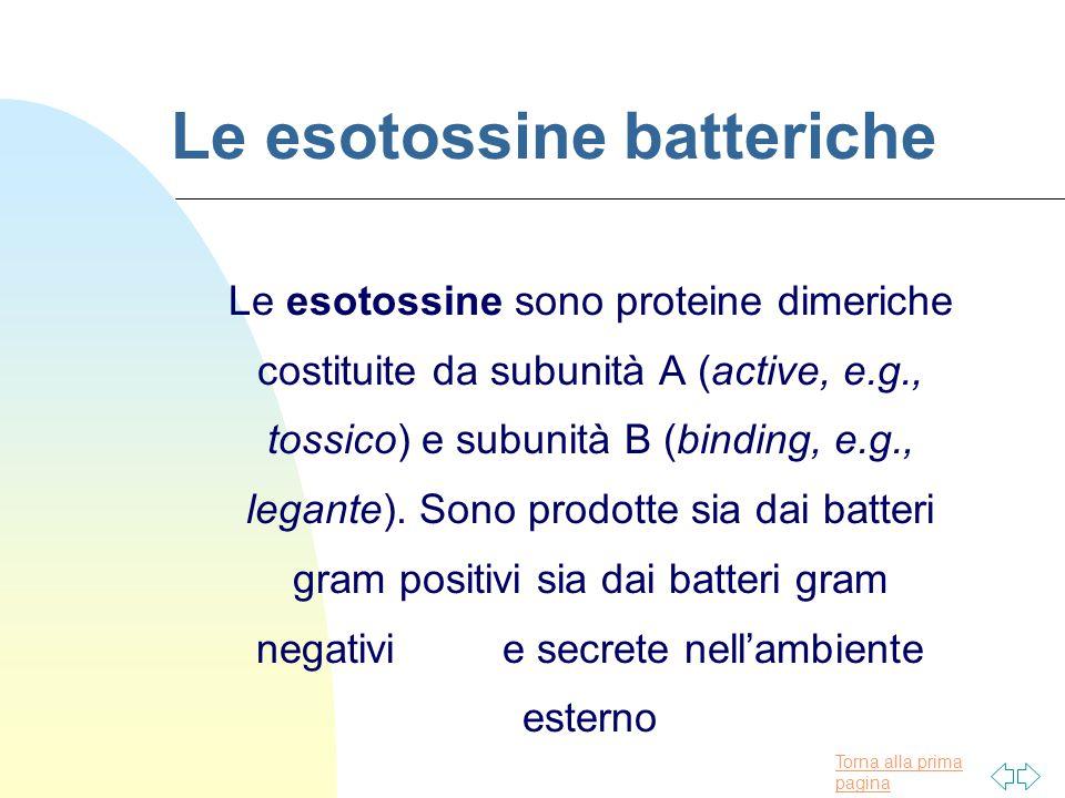 Le esotossine batteriche