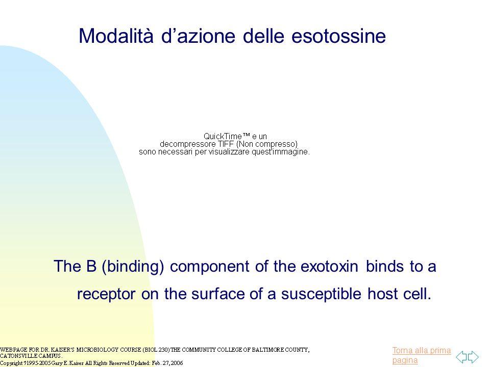 Modalità d'azione delle esotossine