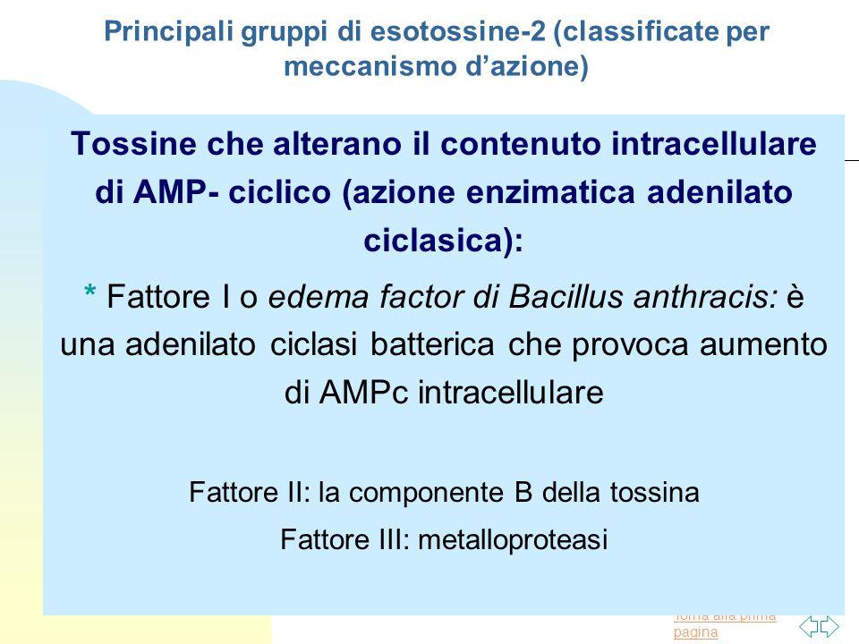 Principali gruppi di esotossine-2 (classificate per meccanismo d'azione)