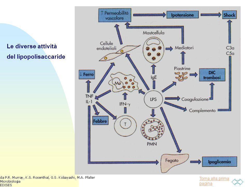 Le diverse attività del lipopolisaccaride