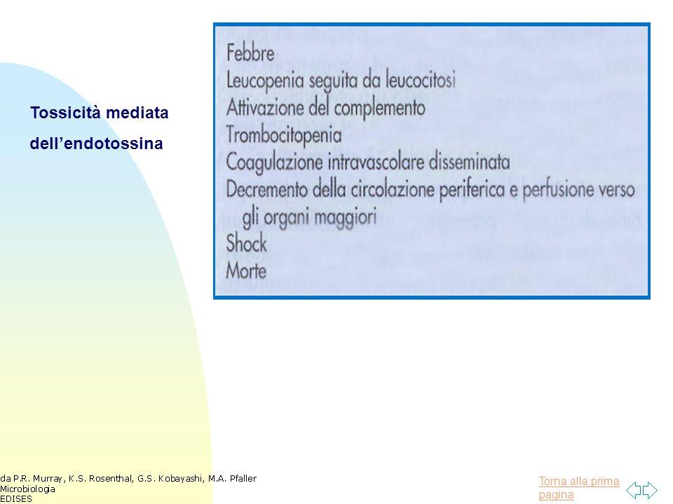 Tossicità mediata dell'endotossina