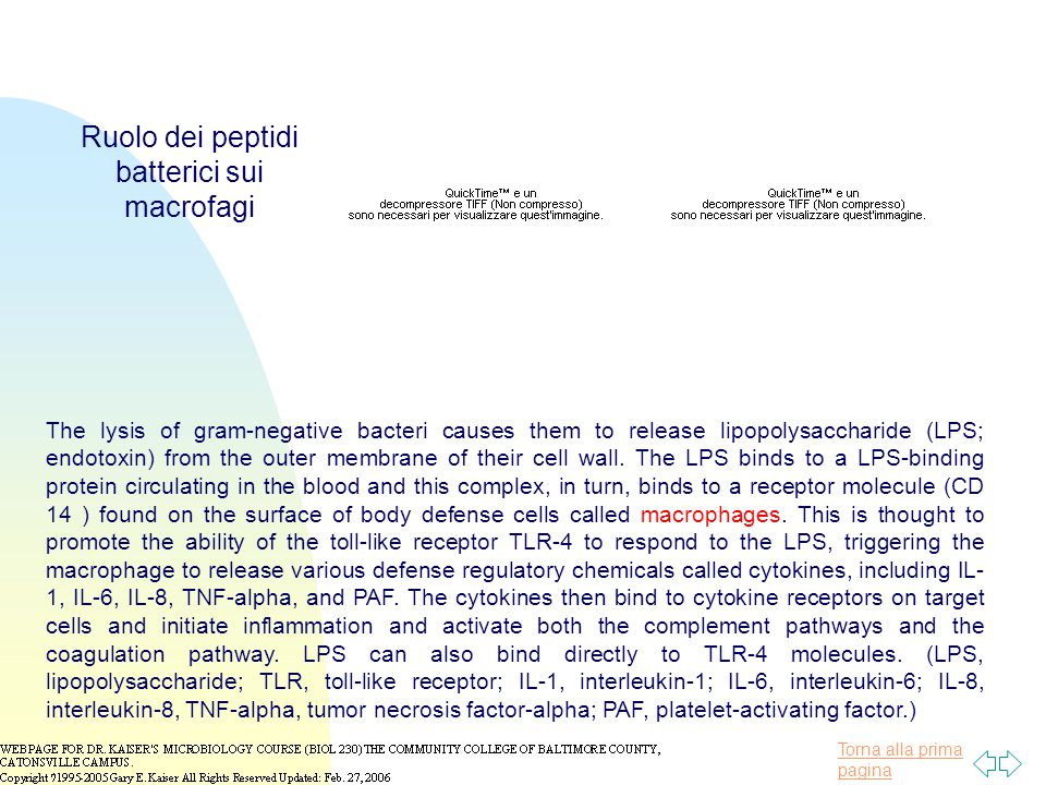 Ruolo dei peptidi batterici sui macrofagi