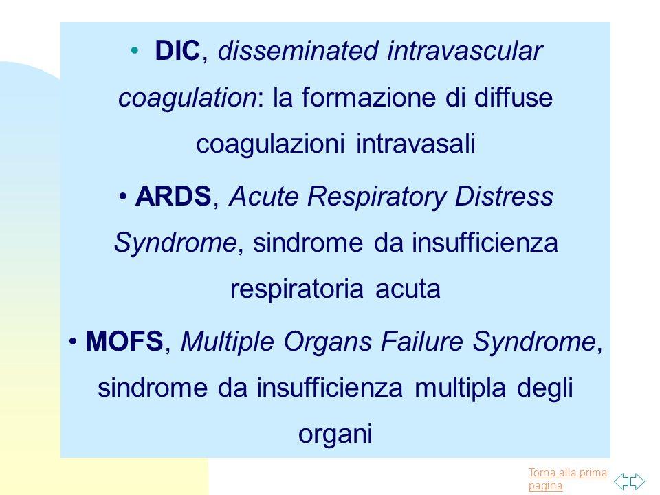 DIC, disseminated intravascular coagulation: la formazione di diffuse coagulazioni intravasali