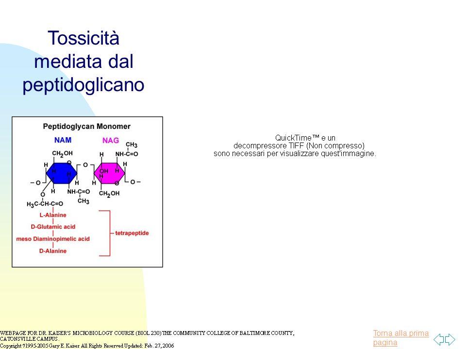 Tossicità mediata dal peptidoglicano