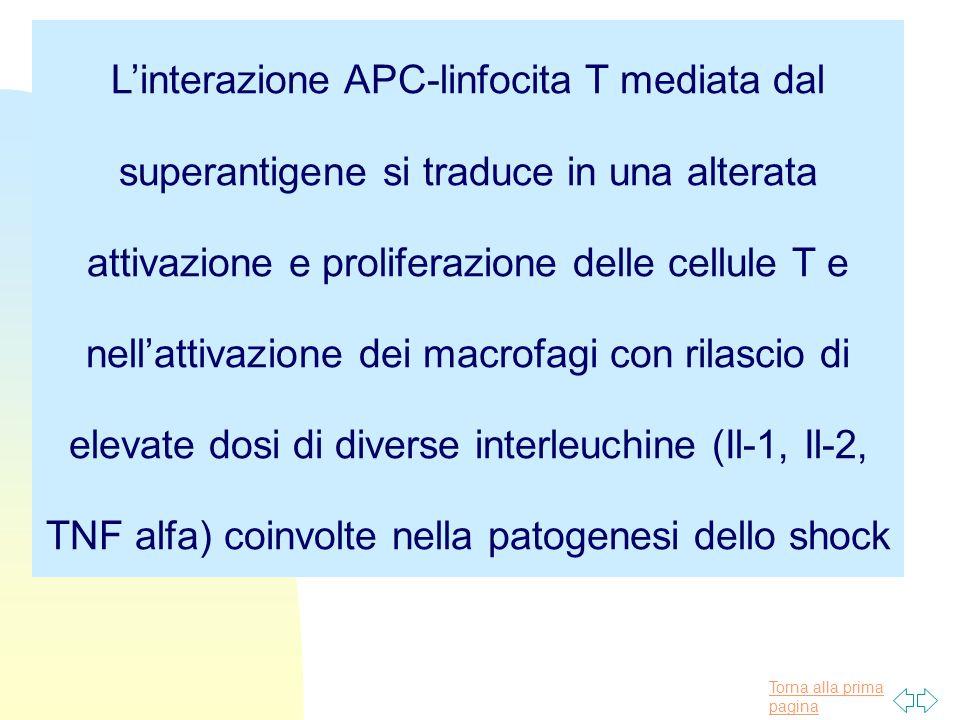 L'interazione APC-linfocita T mediata dal superantigene si traduce in una alterata attivazione e proliferazione delle cellule T e nell'attivazione dei macrofagi con rilascio di elevate dosi di diverse interleuchine (Il-1, Il-2, TNF alfa) coinvolte nella patogenesi dello shock