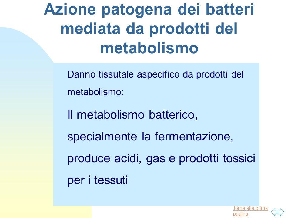 Azione patogena dei batteri mediata da prodotti del metabolismo