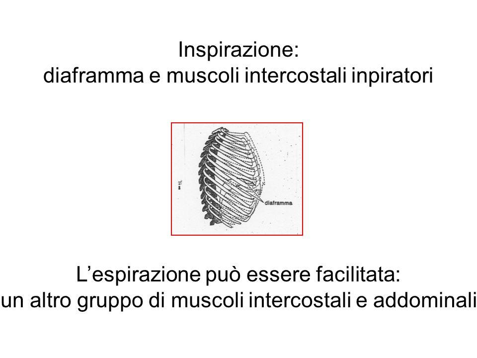 Inspirazione: diaframma e muscoli intercostali inpiratori