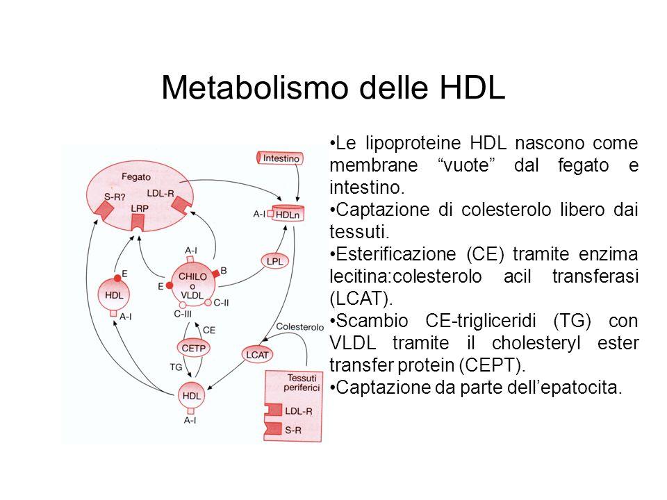 Metabolismo delle HDL Le lipoproteine HDL nascono come membrane vuote dal fegato e intestino. Captazione di colesterolo libero dai tessuti.