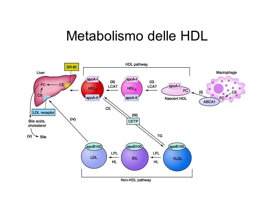 Metabolismo delle HDL