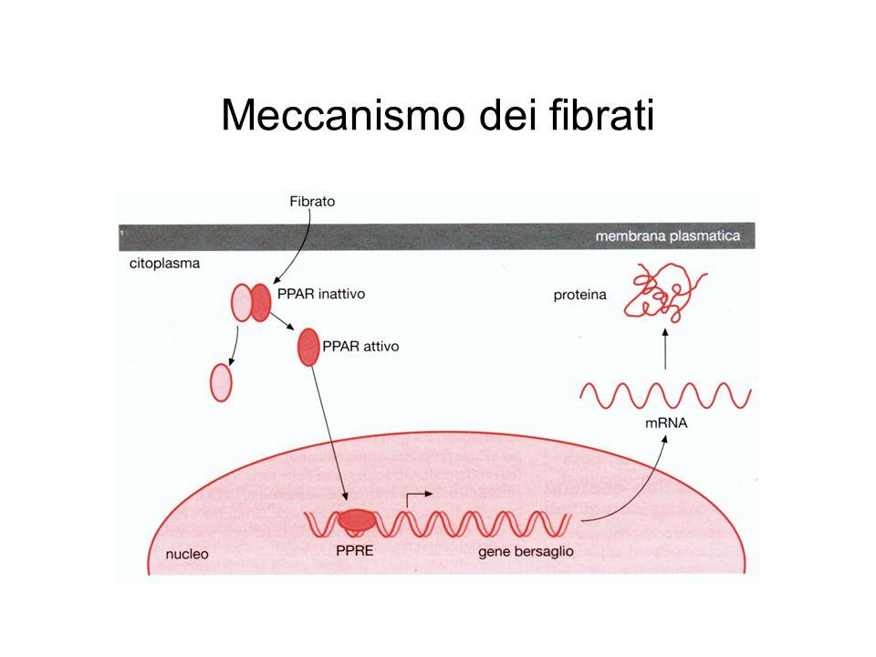 Meccanismo dei fibrati