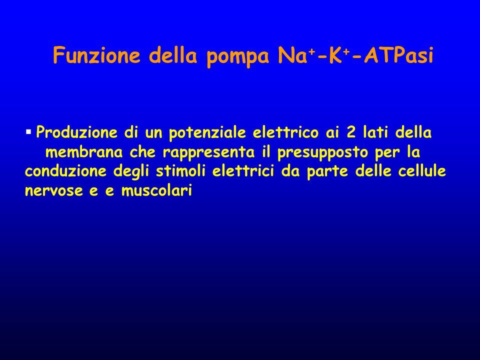 Funzione della pompa Na+-K+-ATPasi