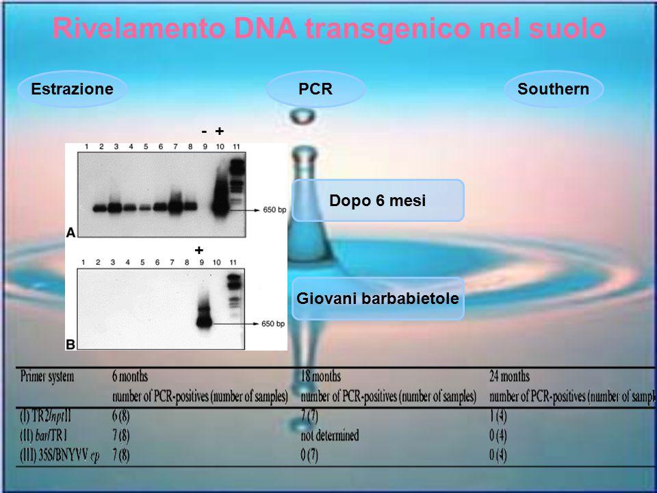 Rivelamento DNA transgenico nel suolo