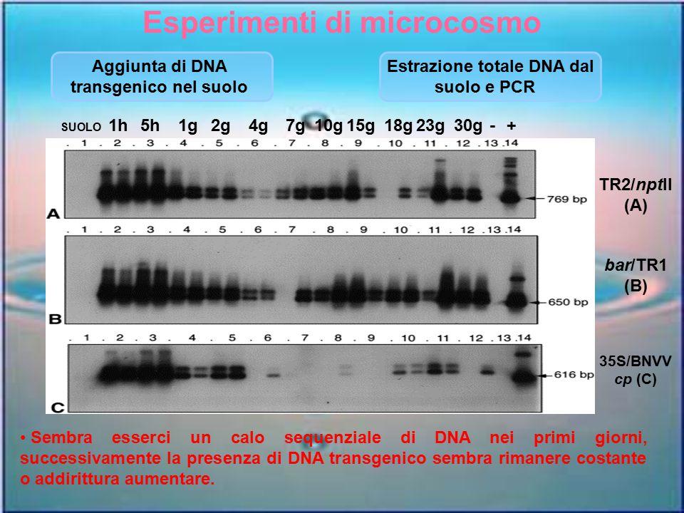 Esperimenti di microcosmo Estrazione totale DNA dal
