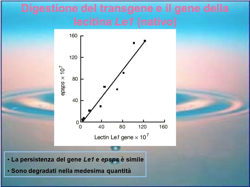Digestione del transgene e il gene della lecitina Le1 (nativo)