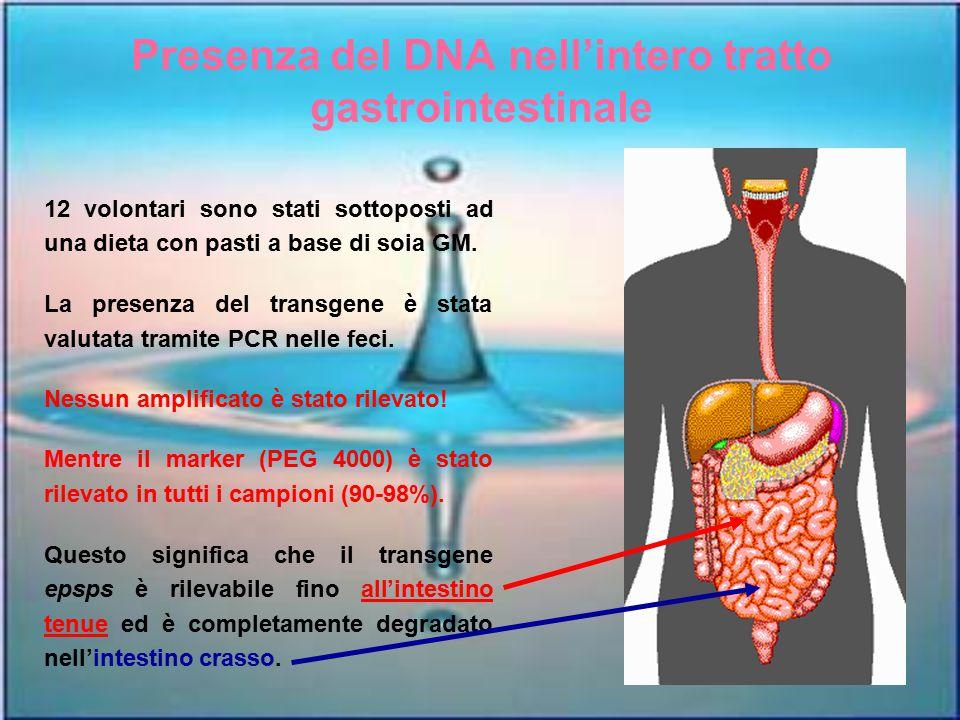 Presenza del DNA nell'intero tratto gastrointestinale