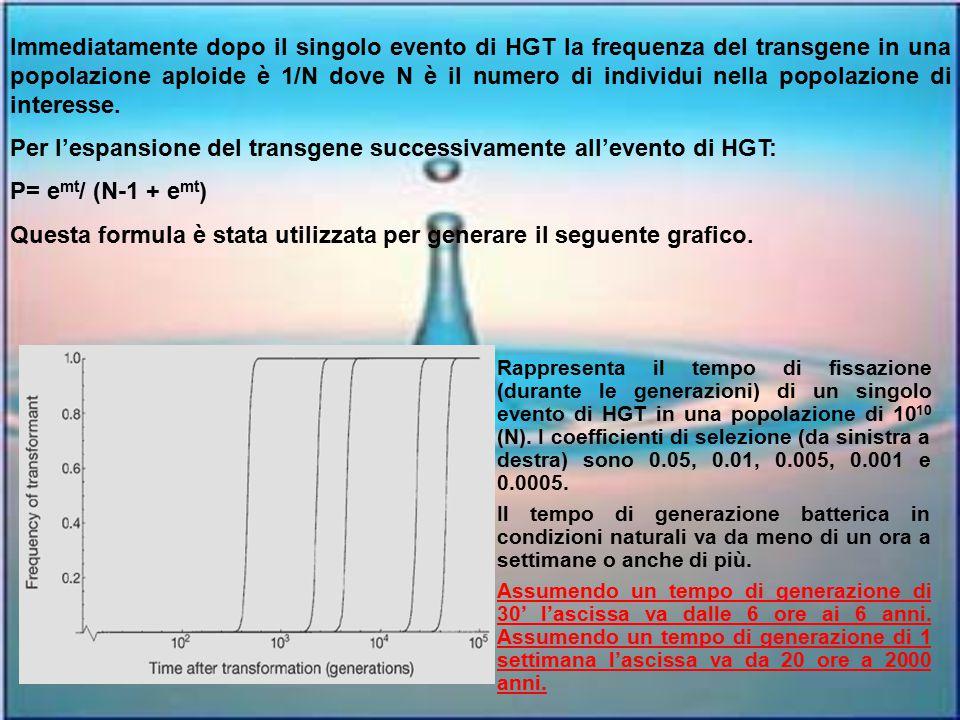 Per l'espansione del transgene successivamente all'evento di HGT: