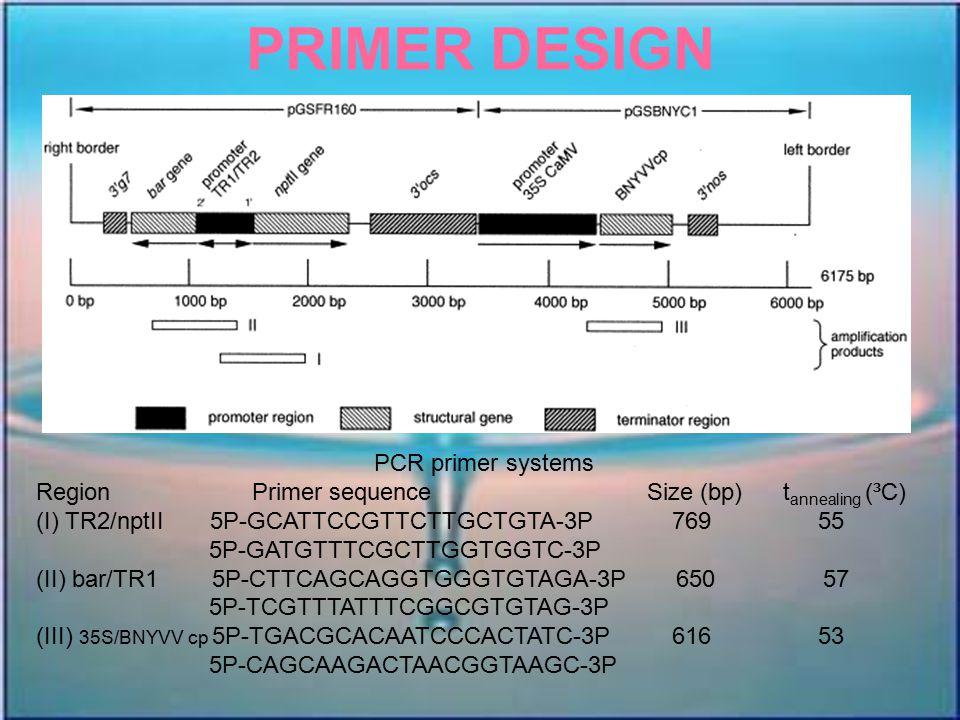 PRIMER DESIGN PCR primer systems