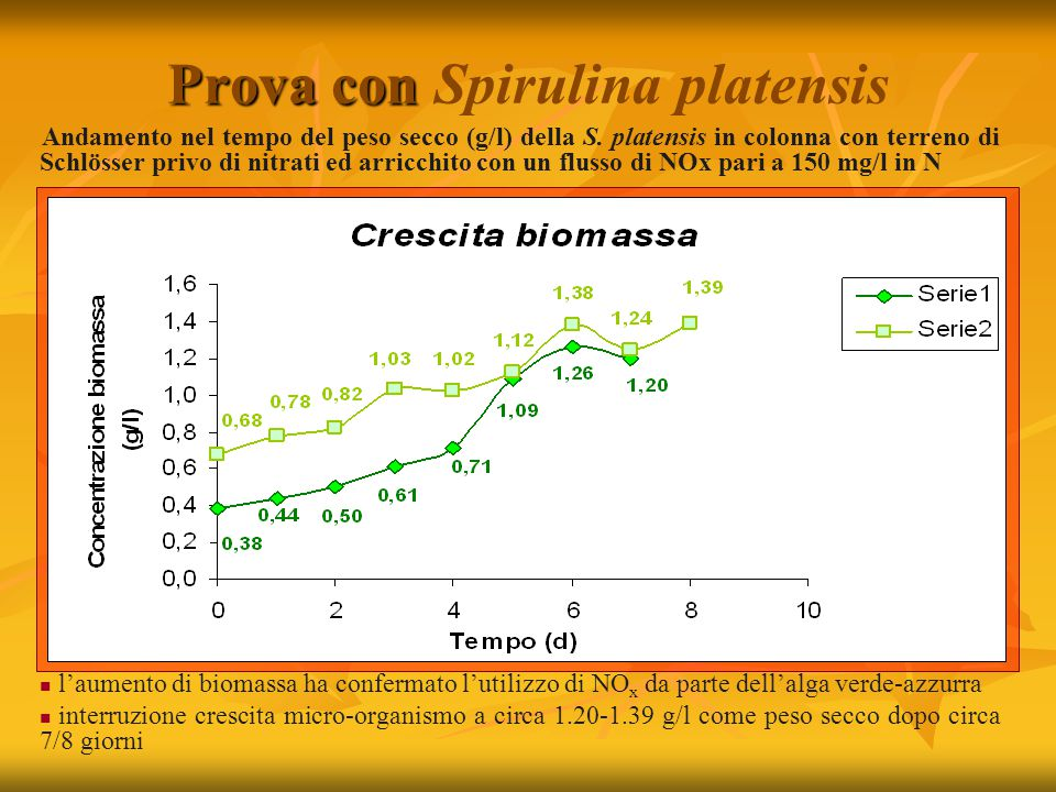 Prova con Spirulina platensis