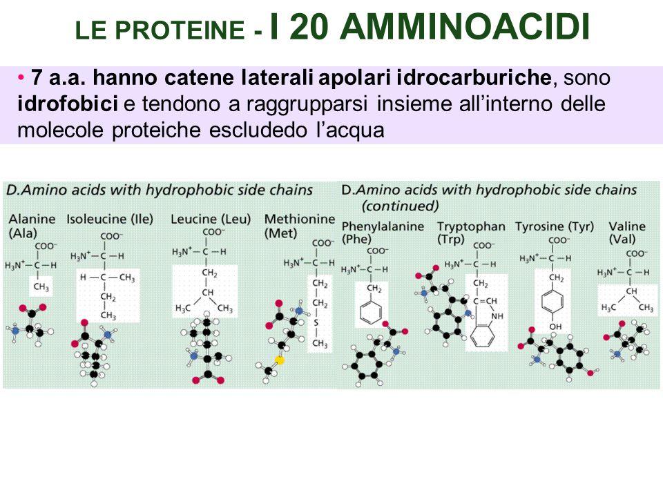LE PROTEINE - I 20 AMMINOACIDI