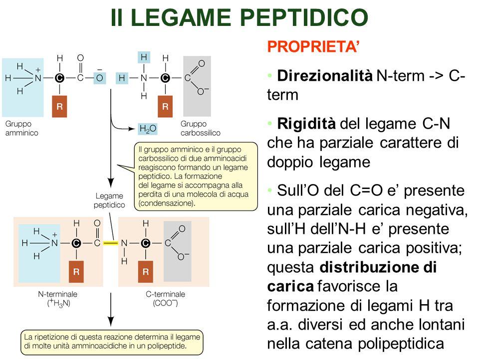 Il LEGAME PEPTIDICO PROPRIETA' Direzionalità N-term -> C-term