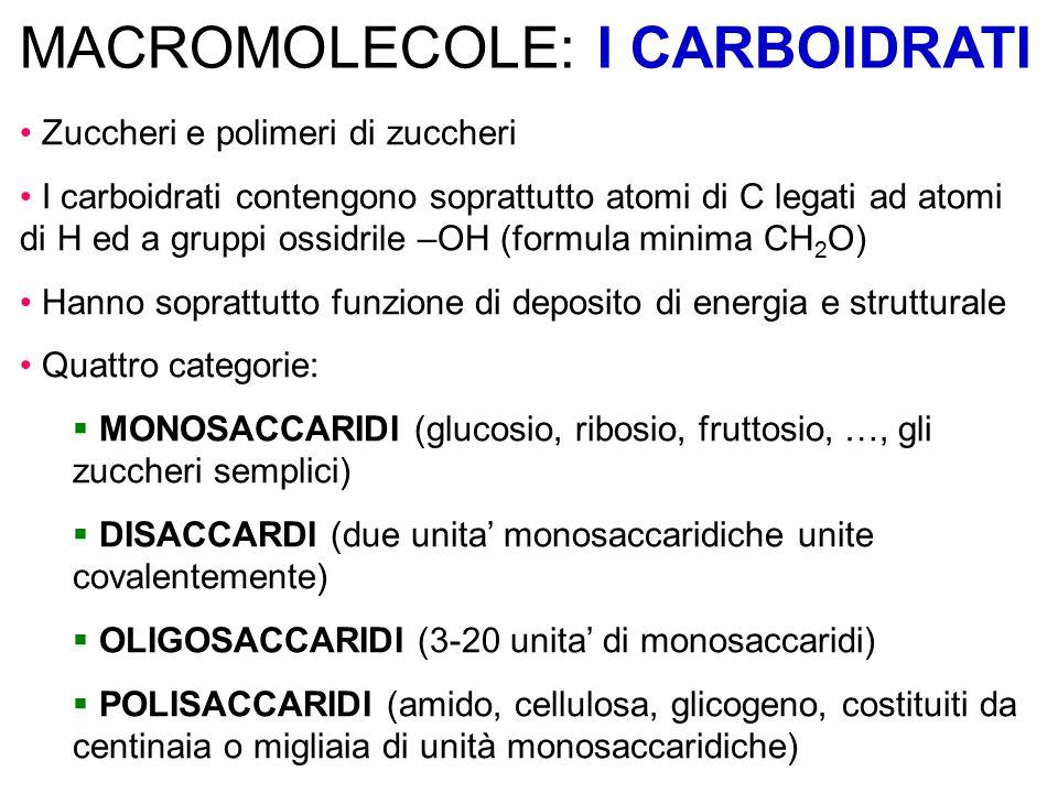 MACROMOLECOLE: I CARBOIDRATI