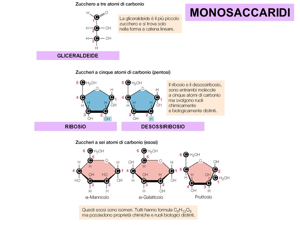 MONOSACCARIDI GLICERALDEIDE RIBOSIO DESOSSIRIBOSIO