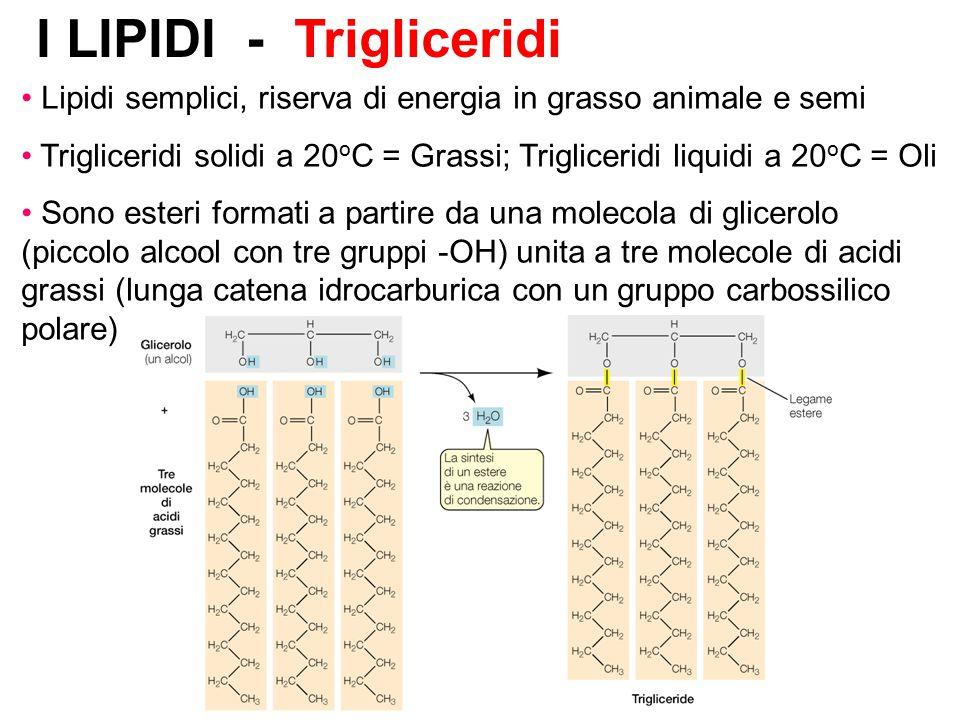 I LIPIDI - Trigliceridi