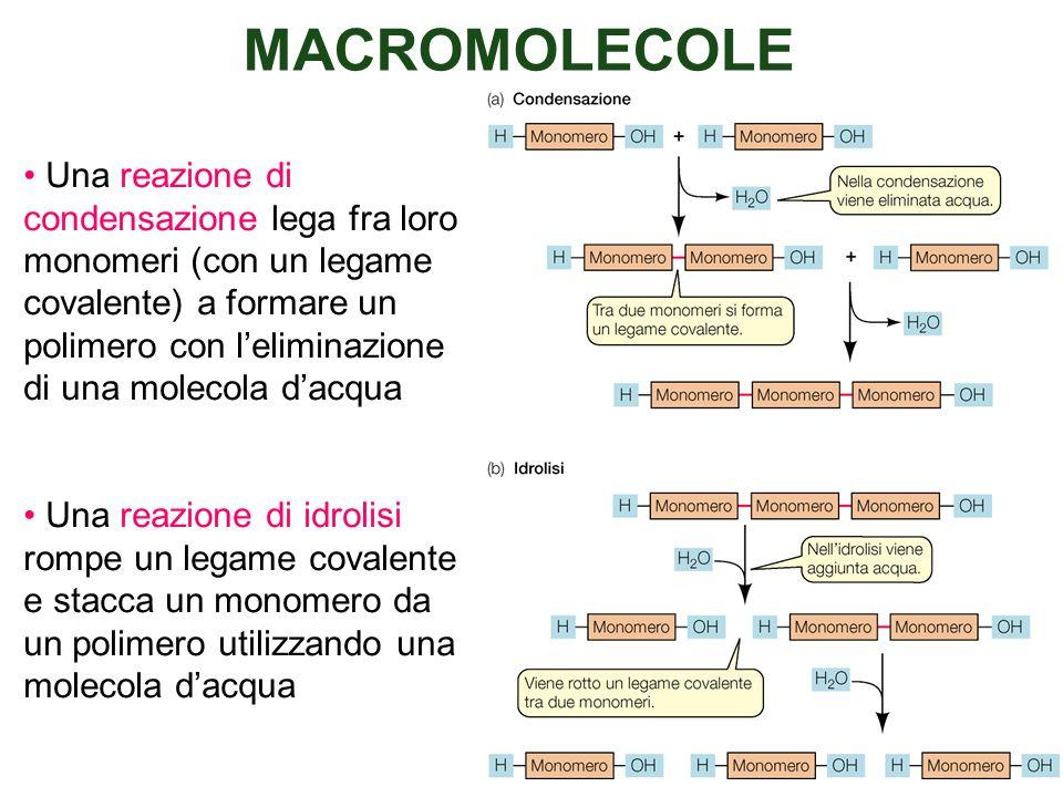MACROMOLECOLE