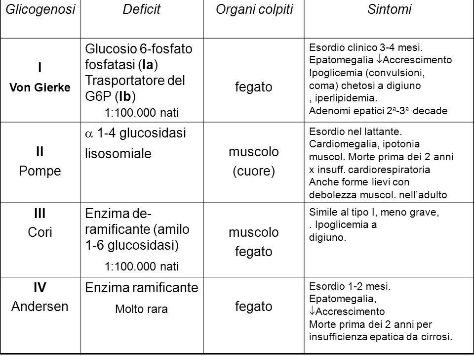  1-4 glucosidasi lisosomiale muscolo (cuore)